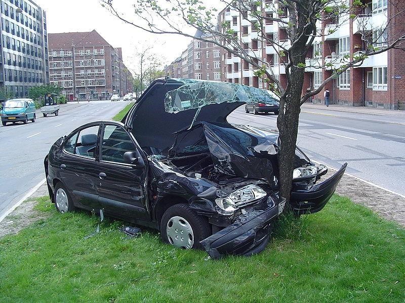 Дерево остановило автомобиль