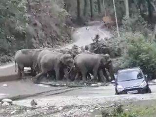 Слоны «учат» туристов правильно парковаться