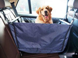 Как лучше перевозить животных в машине